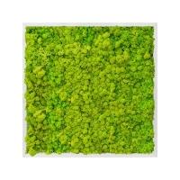 Картина из стабилизированного мха aluminum 100% reindeer moss (spring green) l70 w70 h6 см