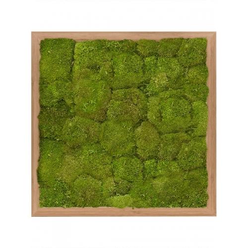 Картина из стабилизированного мха bamboo 100% flat moss (natural) l40 w40 h6 см