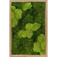 Картина из стабилизированного мха bamboo 30% ball moss (natural) and 70% flat moss l40 w60 h6 см