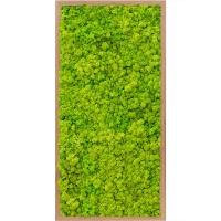Картина из стабилизированного мха bamboo 100% reindeer moss (spring green) l40 w80 h6 см