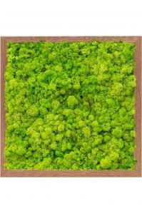 Картина из стабилизированного мха meranti 100% reindeer moss (spring green) l40 w40 h6 см