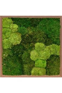 Картина из стабилизированного мха meranti 30% ball moss (natural) and 70% flat moss l60 w60 h6 см