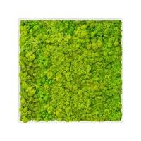 Картина из стабилизированного мха mdf ral 9010 satin gloss 100% reindeer moss (spring green) l100 w100 h6 см