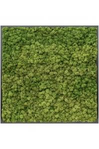 Картина из стабилизированного мха mdf ral 9005 satin gloss 100% reindeer moss (forest green) l100 w100 h6 см