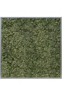 Картина из стабилизированного мха mdf ral 7016 satin gloss 100% reindeer moss (dark green) l100 w100 h6 см