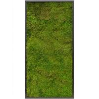 Картина из стабилизированного мха mdf ral 9005 satin gloss 100% flat moss l60 w120 h6 см