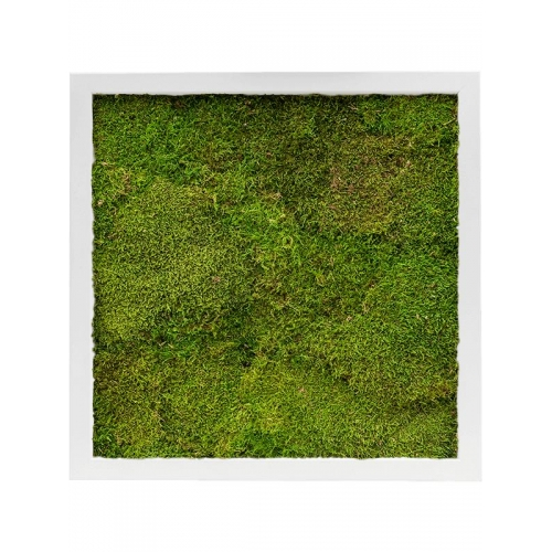 Картина из стабилизированного мха mdf ral 9010 satin gloss 100% flat moss l40 w40 h6 см