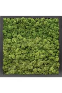 Картина из стабилизированного мха mdf ral 9005 satin gloss 100% reindeer moss (forest green) l40 w40 h6 см