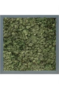 Картина из стабилизированного мха mdf ral 7016 satin gloss 100% reindeer moss (dark green) l40 w40 h6 см