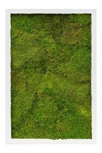 Картина из стабилизированного мха mdf ral 9010 satin gloss 100% flat moss l40 w60 h6 см