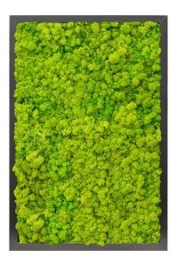 Картина из стабилизированного мха mdf ral 9005 satin gloss 100% reindeer moss (spring green) l40 w60 h6 см