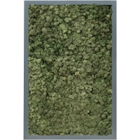 Картина из стабилизированного мха mdf ral 7016 satin gloss 100% reindeer moss (dark green) l40 w60 h6 см