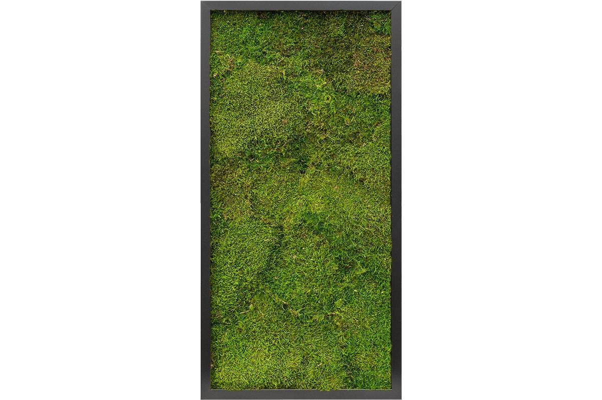 Картина из стабилизированного мха mdf ral 9005 satin gloss 100% flat moss l40 w80 h6 см