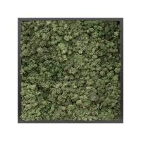 Картина из стабилизированного мха mdf ral 9005 satin gloss 100% reindeer moss (dark green) l60 w60 h6 см