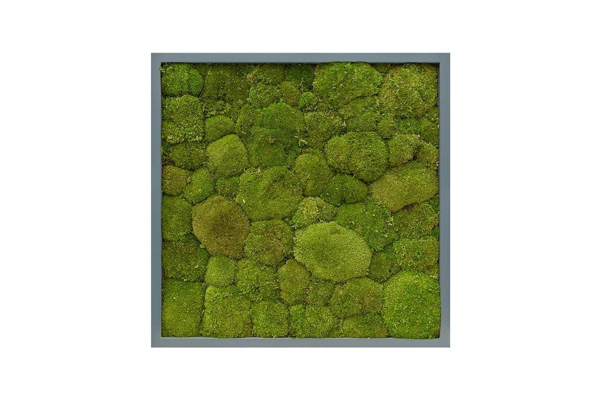 Картина из стабилизированного мха mdf ral 7016 satin gloss 100% ball moss (natural) l60 w60 h6 см