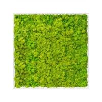 Картина из стабилизированного мха mdf ral 9010 satin gloss 100% reindeer moss (spring green) l80 w80 h6 см