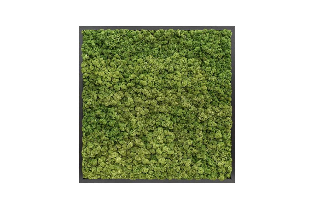 Картина из стабилизированного мха mdf ral 9005 satin gloss 100% reindeer moss (forest green) l80 w80 h6 см