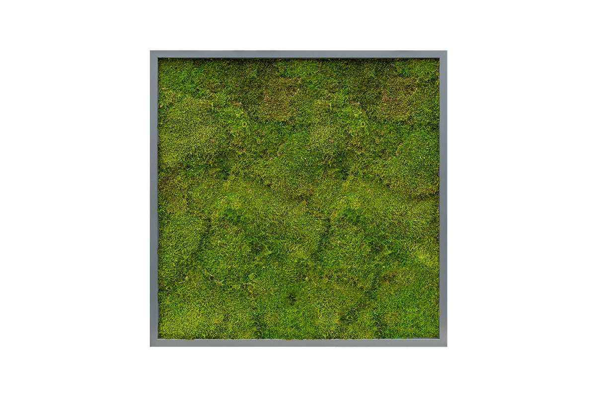 Картина из стабилизированного мха mdf ral 7016 satin gloss 100% flat moss l80 w80 h6 см