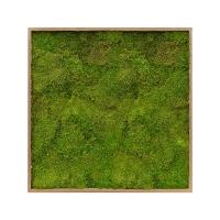 Картина из стабилизированного мха bamboo 100% flat moss l100 w100 h6 см