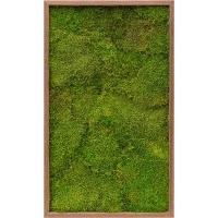 Картина из стабилизированного мха meranti 100% flat moss l60 w100 h6 см