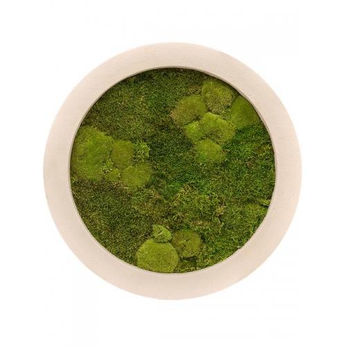 Картина из стабилизированного мха natural 30% ball- and 70% flat moss d60 h5 см