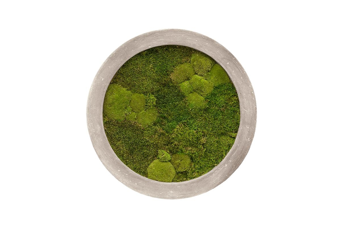 Картина из стабилизированного мха raw grey 30% ball- and 70% flat moss d60 h5 см