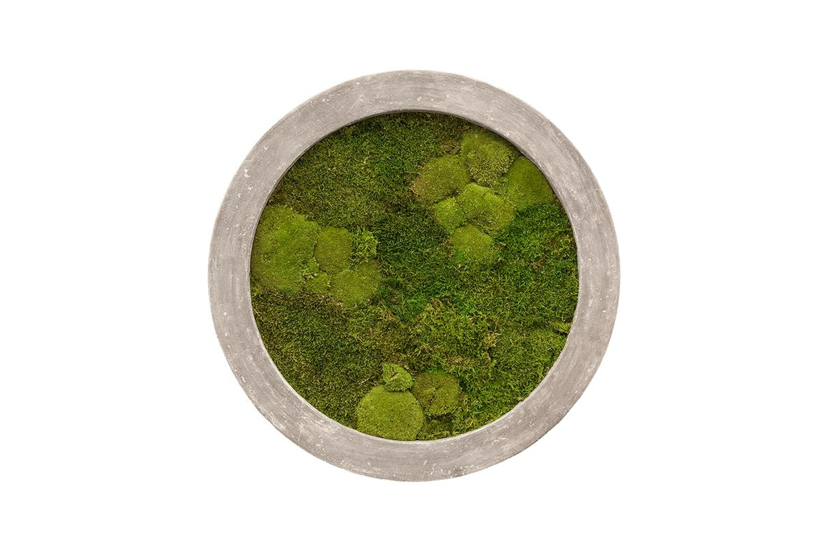 Картина из стабилизированного мха raw grey 30% ball- and 70% flat moss d80 h5 см
