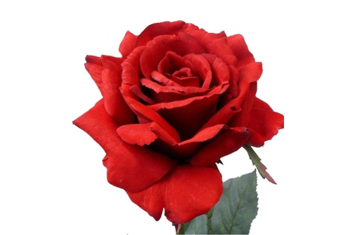 Роза Королевская искусственная красная 67 см - Фото 2