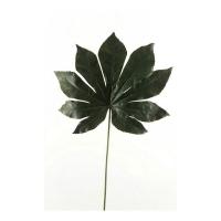 Фатсия лист искусственная темно-зеленая 55 см