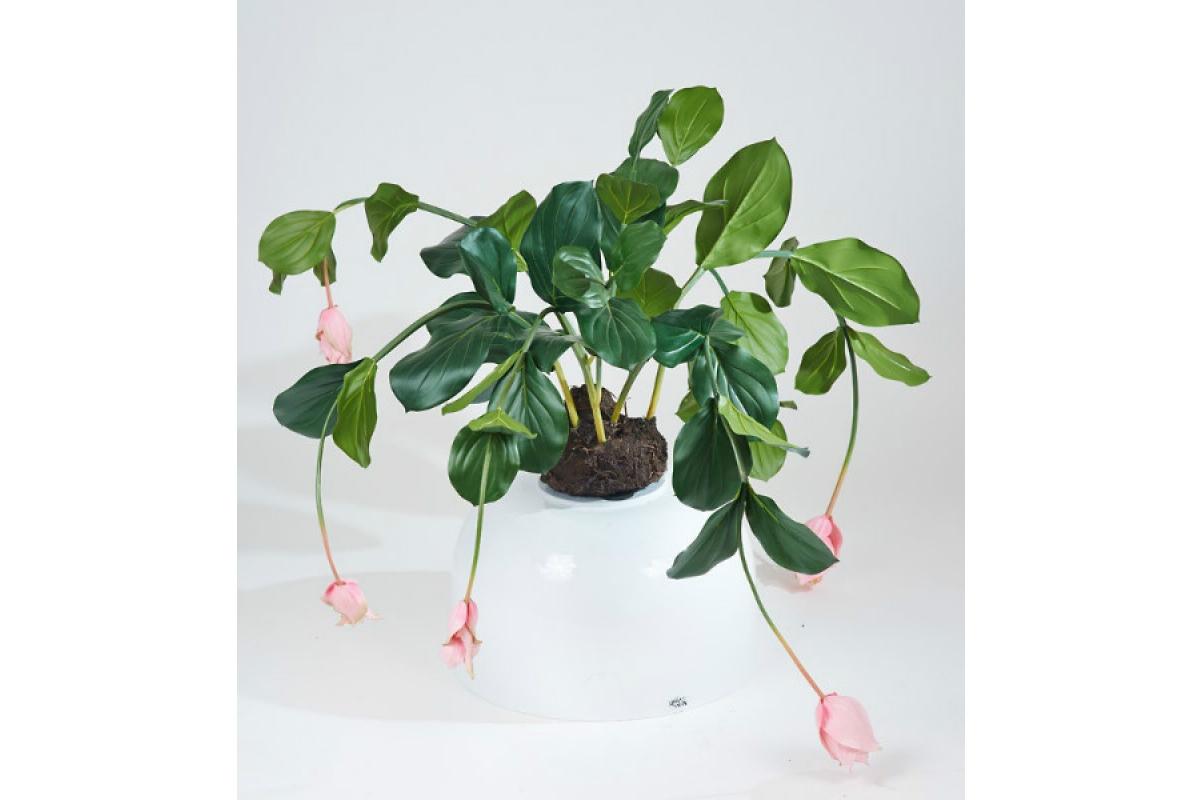 Мединилла в торфе искусственная розовая 75 см (без кашпо) - Фото 3