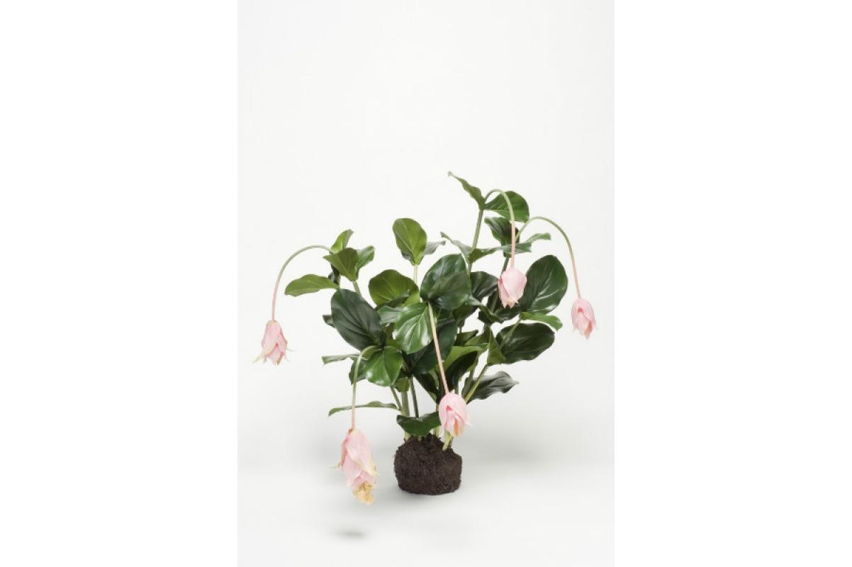 Мединилла в торфе искусственная розовая 75 см (без кашпо)