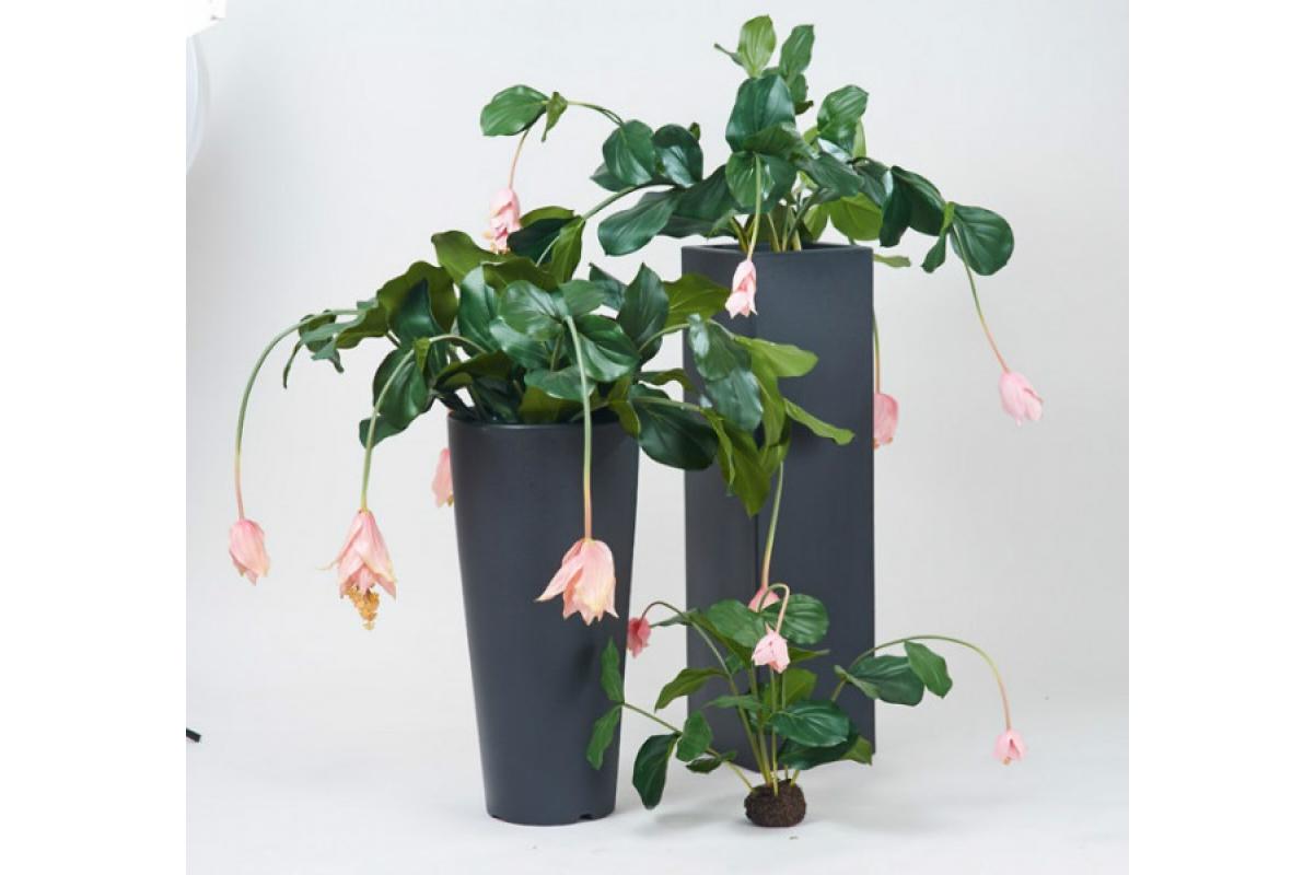 Мединилла в торфе искусственная розовая 75 см (без кашпо) - Фото 2
