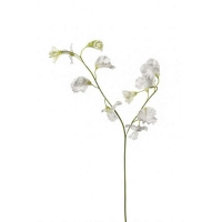 Латурус (горошек) искусственный белый 50 см
