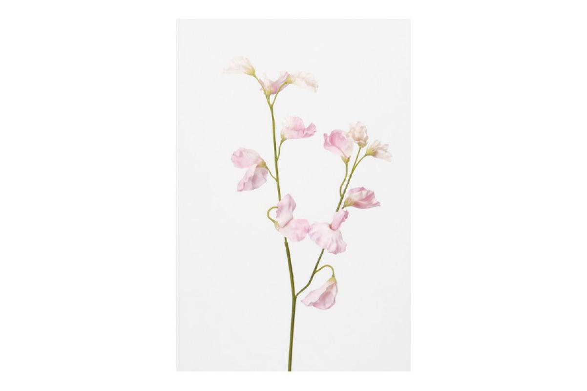 Латурус (горошек) искусственный розовый 90 см