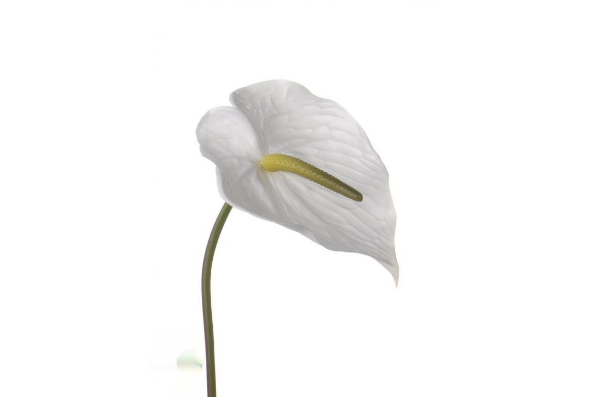 Антуриум Де Люкс искусственный белый 78 см (Real Touch)