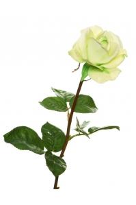 Роза Каролина искусственная лайм 70 см (Real Touch)