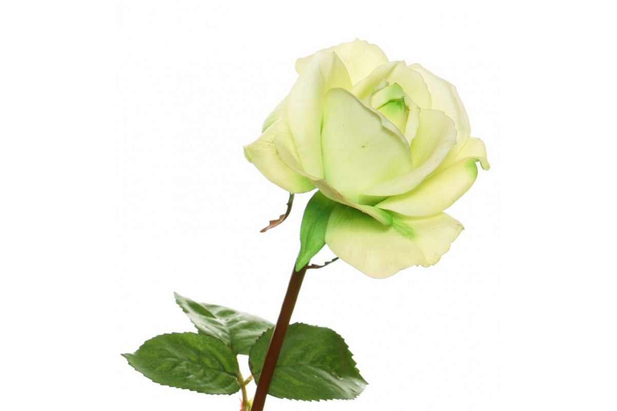 Роза Каролина искусственная лайм 70 см (Real Touch) - Фото 2