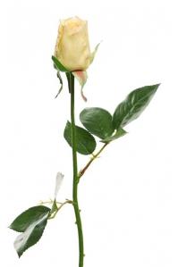 Роза Джой в бутоне искусственная светло-желтая 68 см (Real Touch)