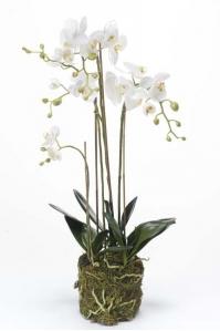Орхидея Фаленопсис искусственная белая с корнями и листьями в торфе 80 см (Real Touch)