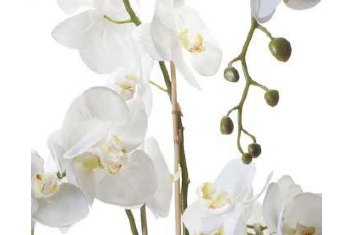 Орхидея Фаленопсис искусственная белая с корнями и листьями в торфе 145 см (Real Touch) - Фото 2