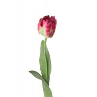 Тюльпан Попугай искусственный темно-розовый 62 см