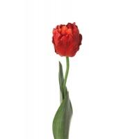 Тюльпан Попугай искусственный красный 62 см