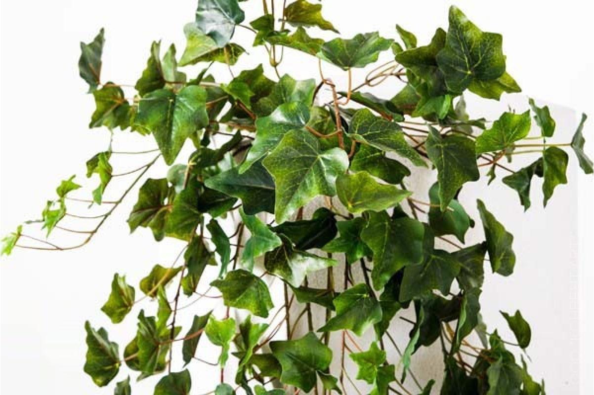 Плющ (хедера) Вьюн искусственный зеленый 100 см - Фото 3