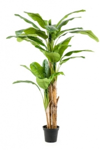 Пальма Банановая искусственная 3-х ствольная 210 см