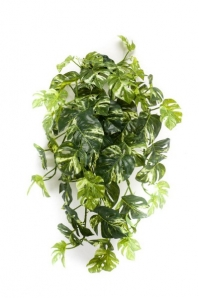 Монстера ампельная зелено-белая 50 см (Real Touch)
