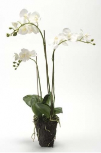 Орхидея Фаленопсис искусственная белая 75 см