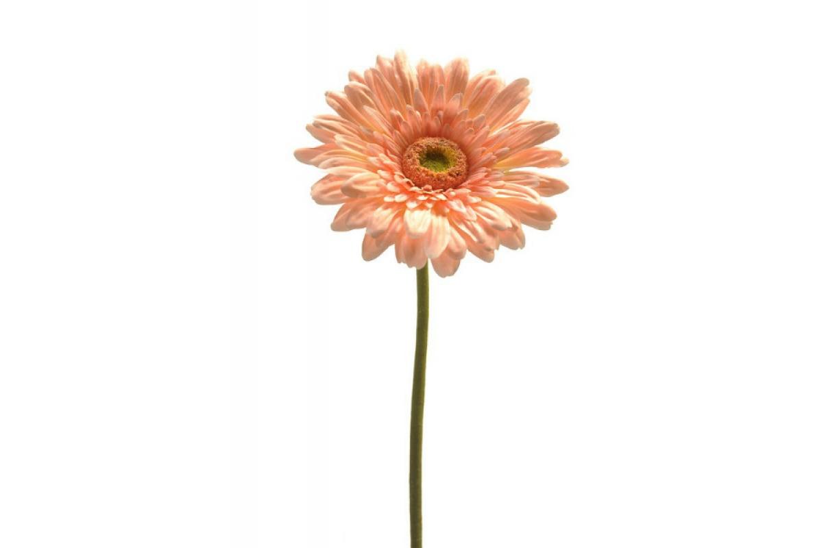 Гербера искусственная светло-розовая 60 см