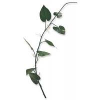 Ветка Филодендрон искусственная натуральная 85 см