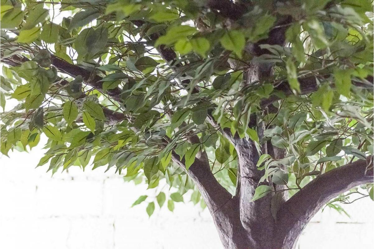 Фикус Гигант искусственный зеленый 350 см - Фото 3