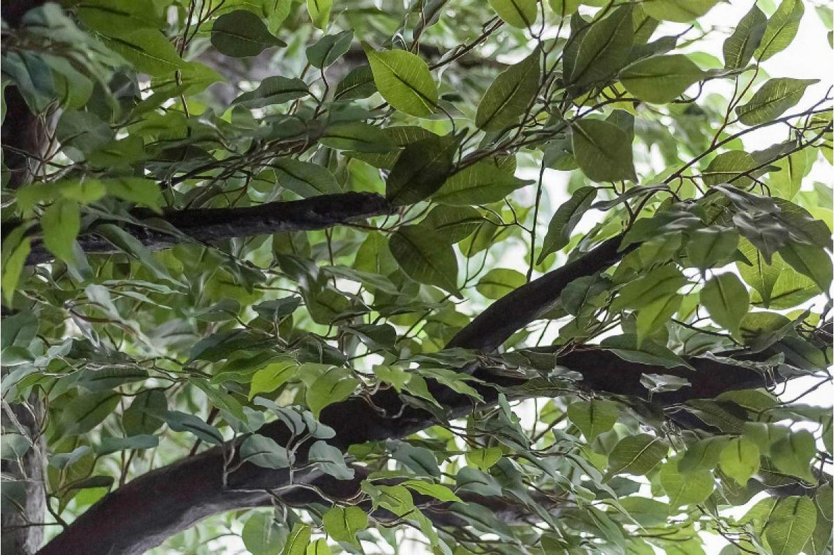 Фикус Гигант искусственный зеленый 350 см - Фото 6